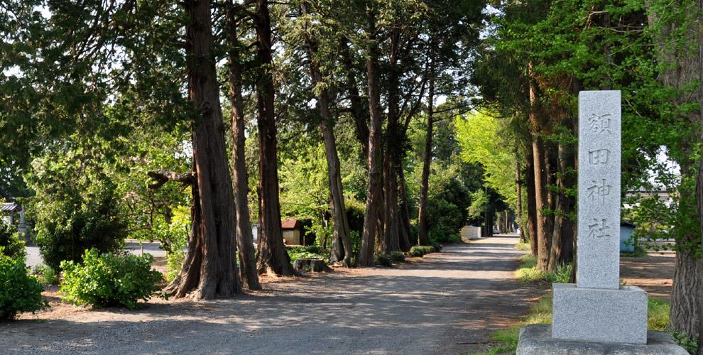 茨城の鹿嶋八幡神社(額田神社)の参道